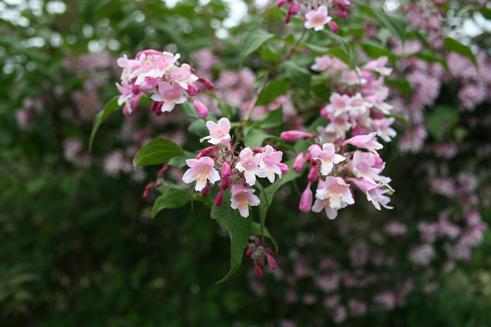 A faire au jardin en mai-Les arbres et les arbustes