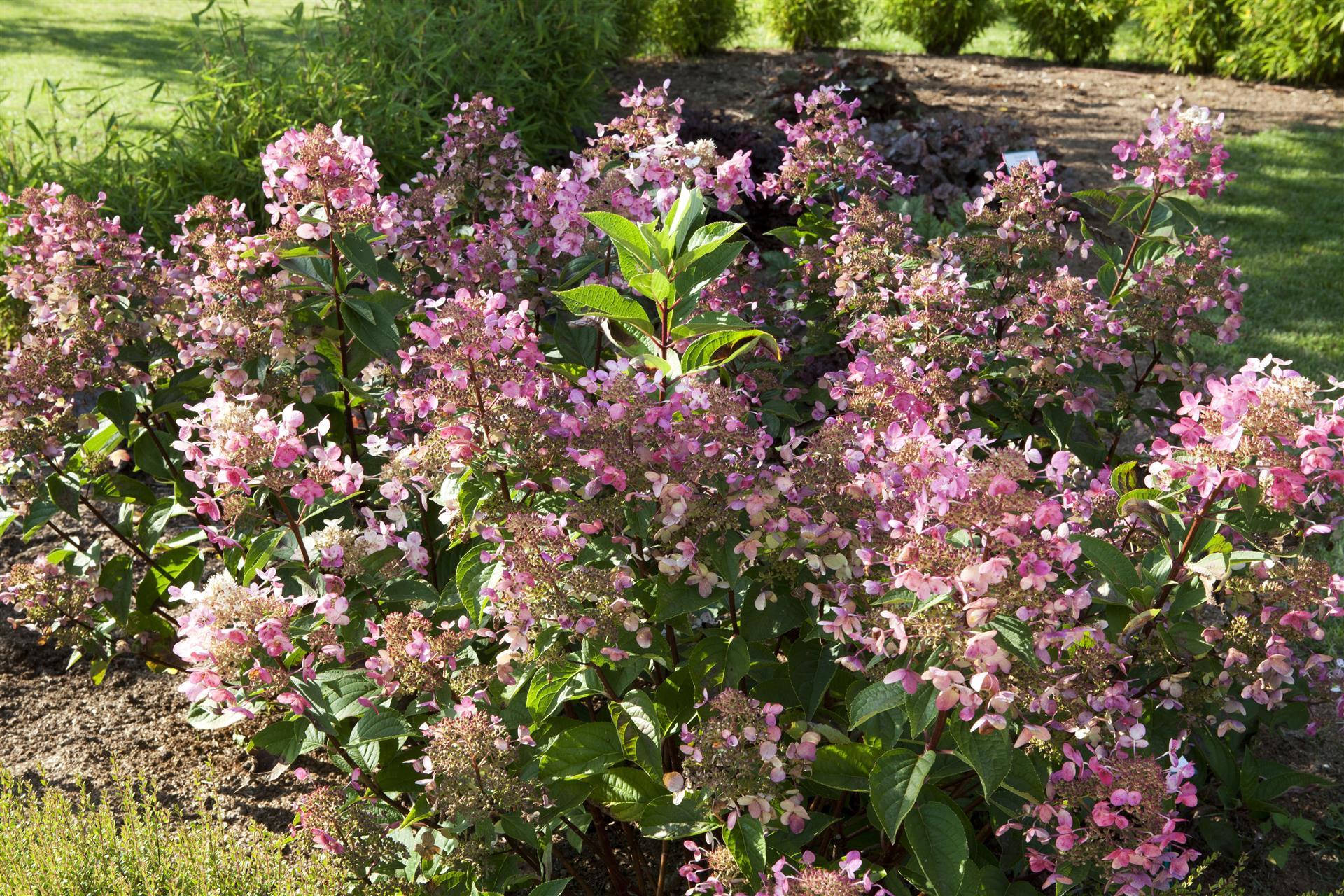 A faire au jardin en septembre - Jardin d\'ornement et ...